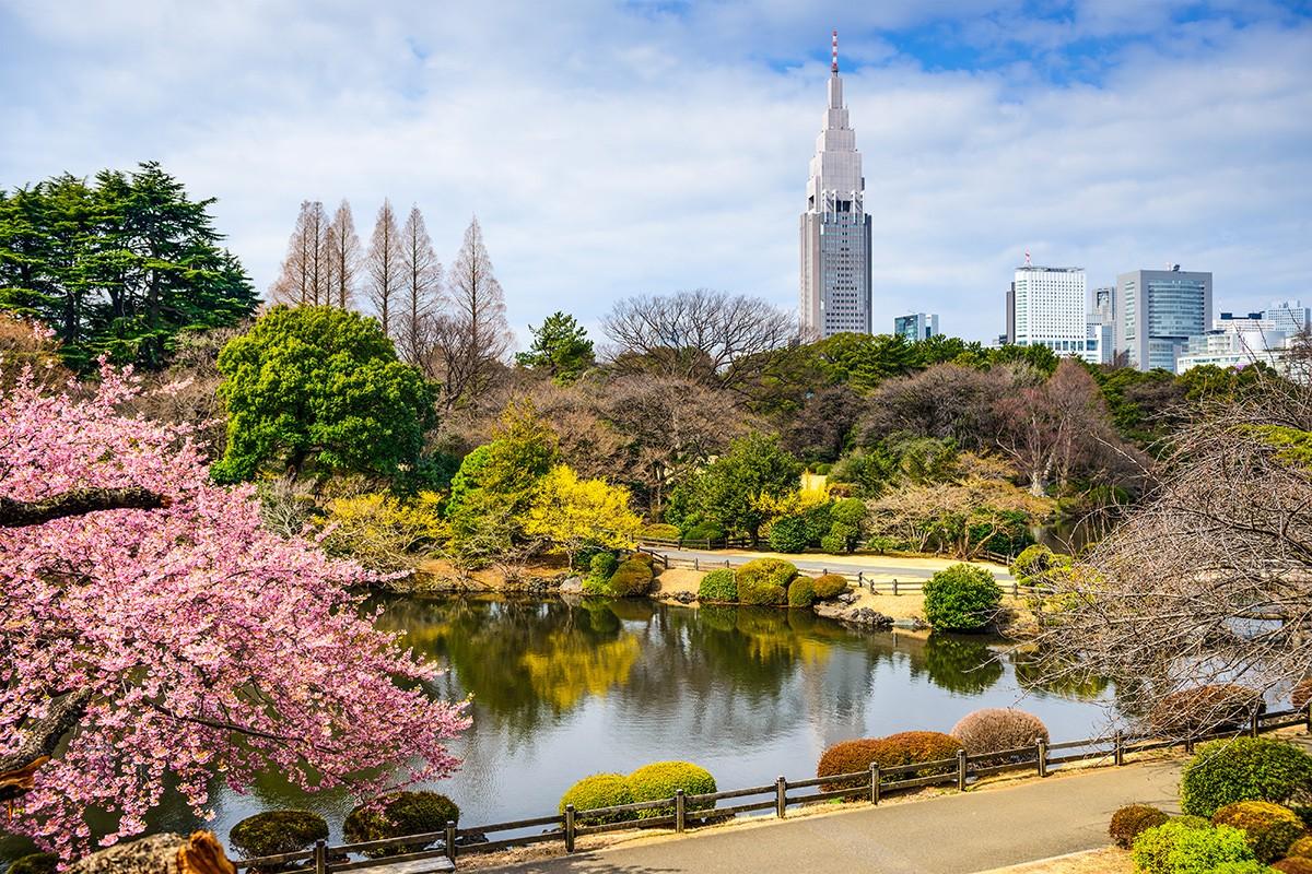 Токио, Япония в районе Синдзюку во время весеннего сезона.