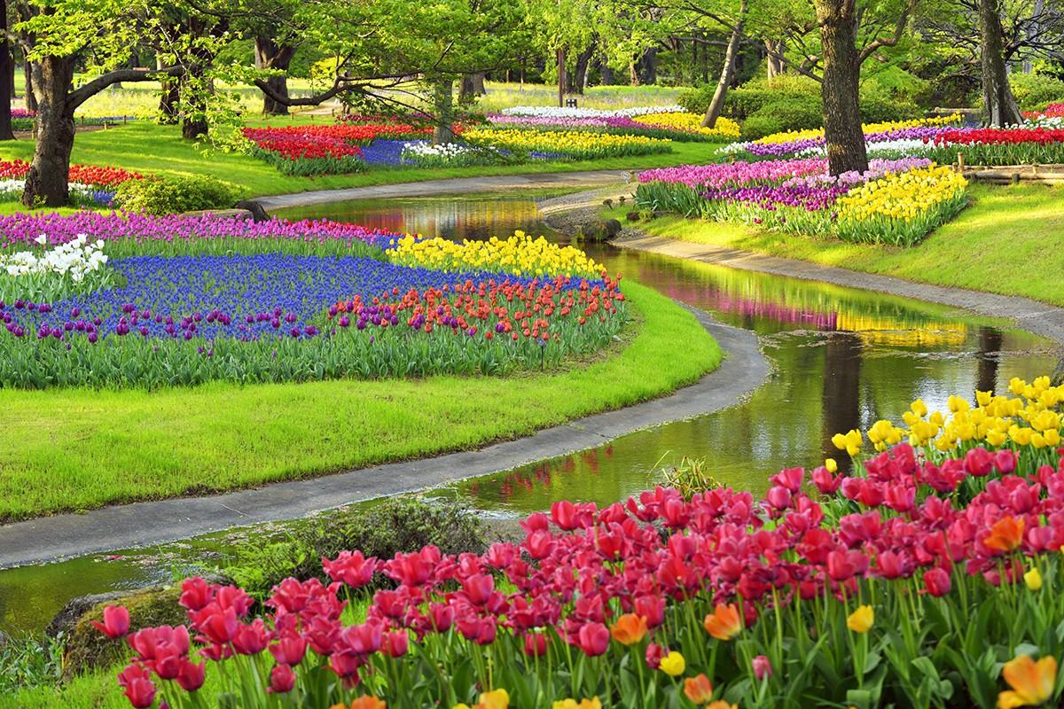 Мемориальный парк Showa - национальный правительственный парк в Акишиме и Тачикава, Токио, Япония