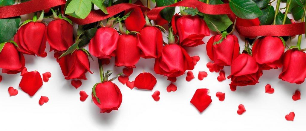 розы, букет, любовь, праздник