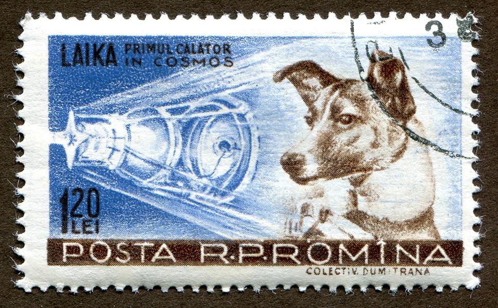 Лайка, собака, космонавт, космос