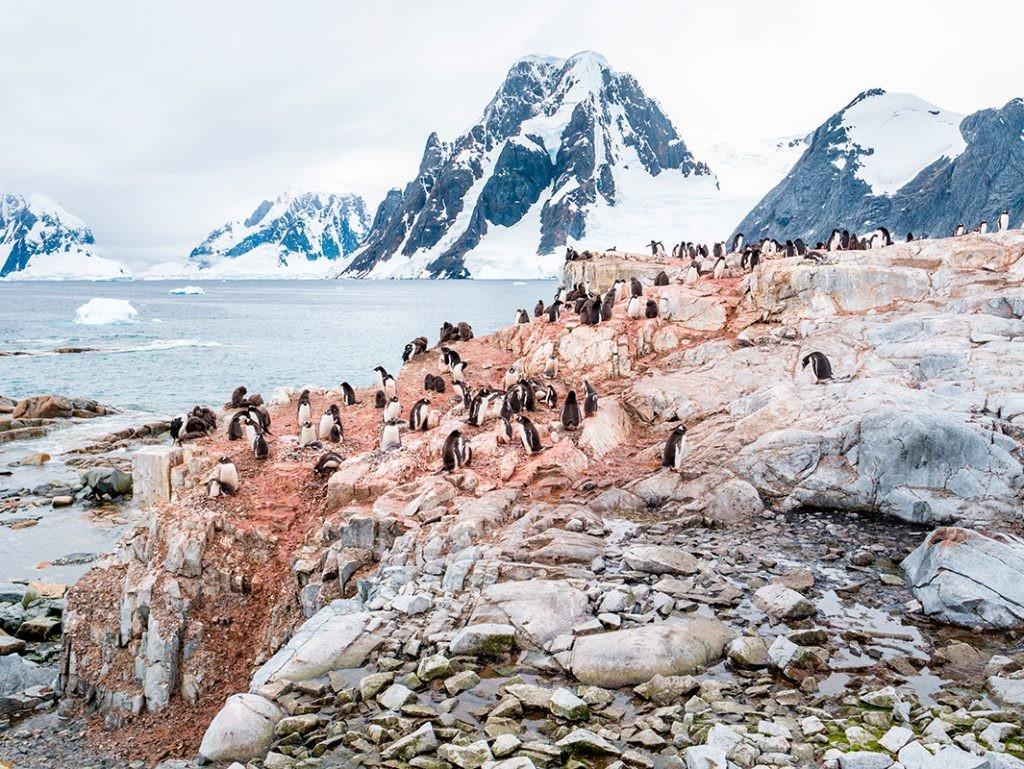 Kiev Peninsula, пингвины, Киев, Антарктида, земля Грэйема