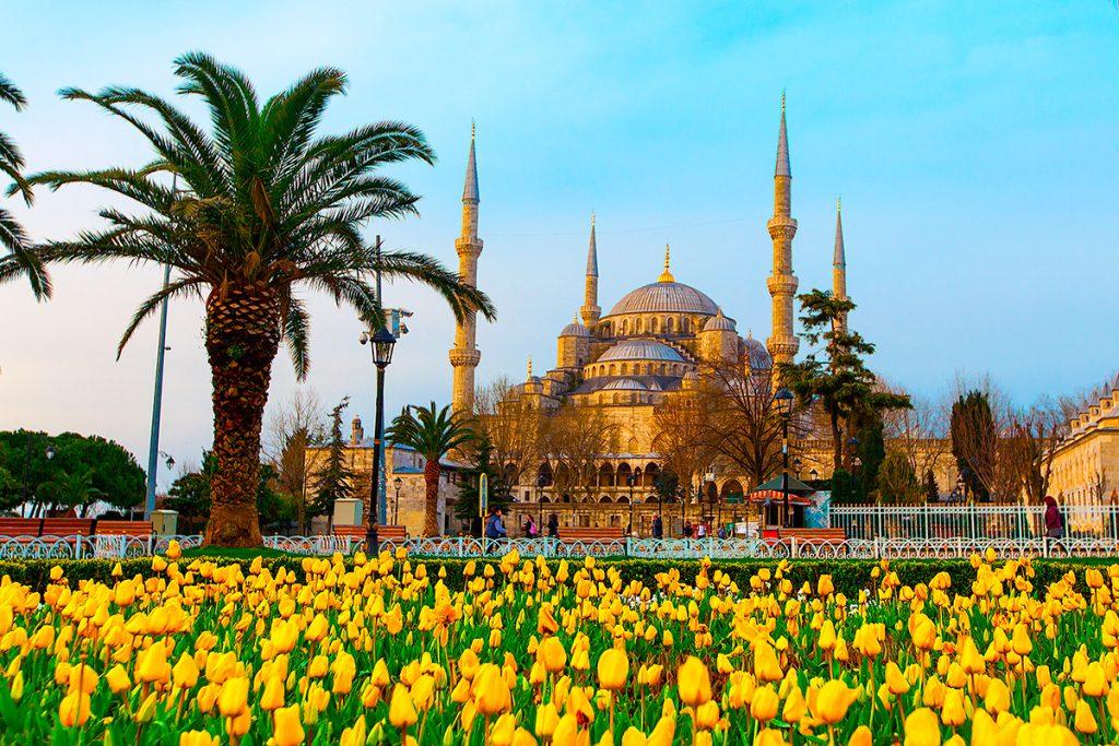 тюльпаны, Турция, Стамбул, желтые тюльпаны