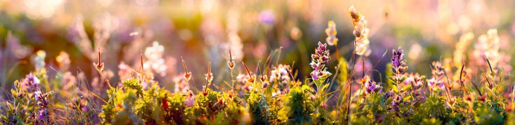 цветы, поле, Купала, трава