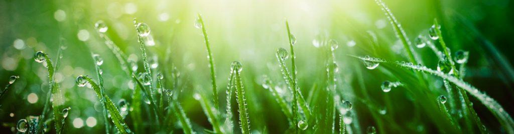 роса, трава, Купала