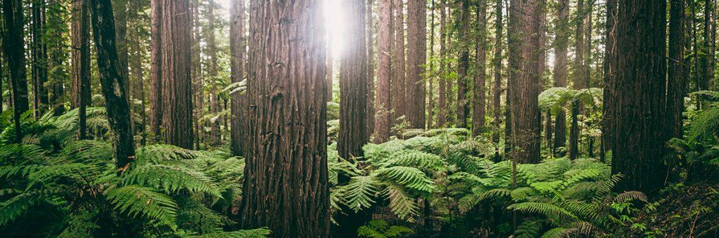 лес, папоротник, ивана купала,