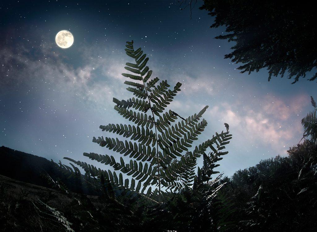 папоротник, ночь, луна, звезды, купала