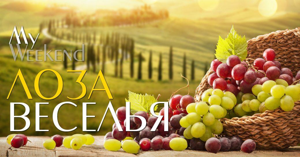виноград, осень