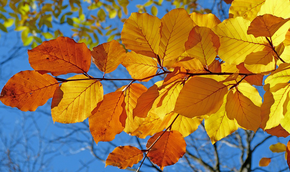 листья, небо, осень