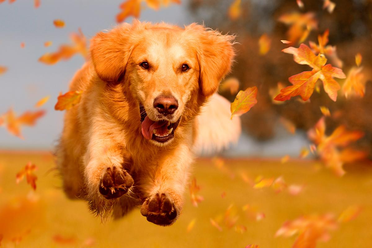 осень, помнить, бархатный сезон