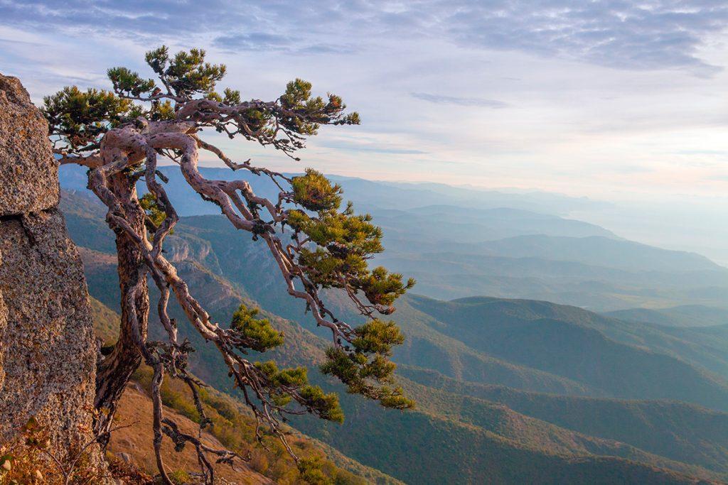Большой каньон Крыма, Украина, Крым, природа, лето, путешествие, скалы, дерево, высота, красота
