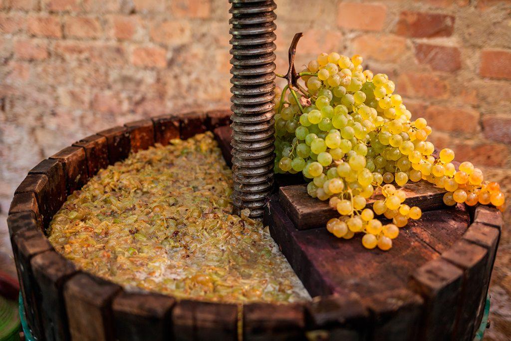 вино, виноград,