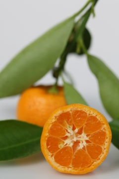 calamansi, маленький апельсин, каламанси, рецепт, фрукт, steirerek