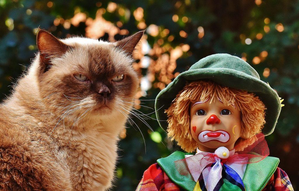 Кот, клоун, грустный клоун, грустный кот