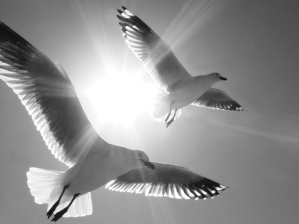 Ричард Бах: Иллюзии одной чайки