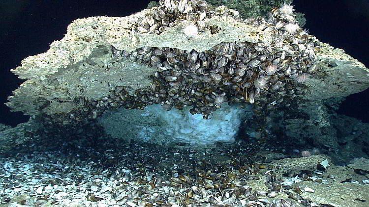 Газогидраты в океане