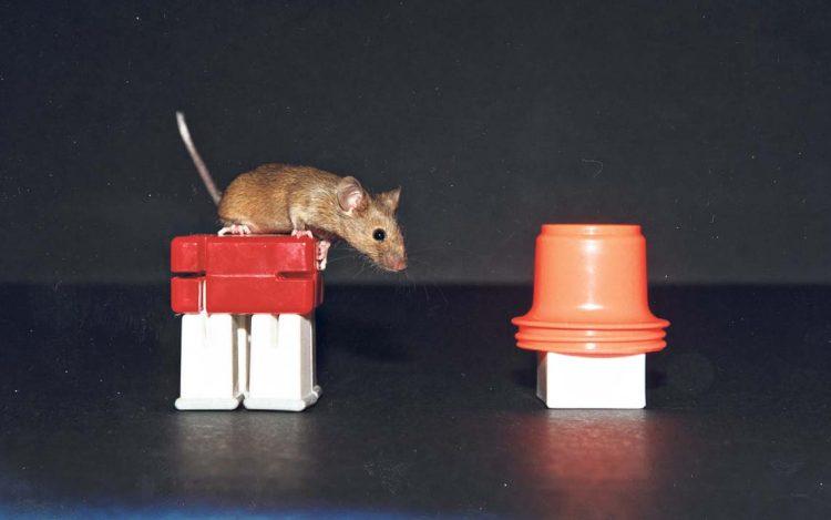 тайны мозга, исследование на подопытных животных, интеллект