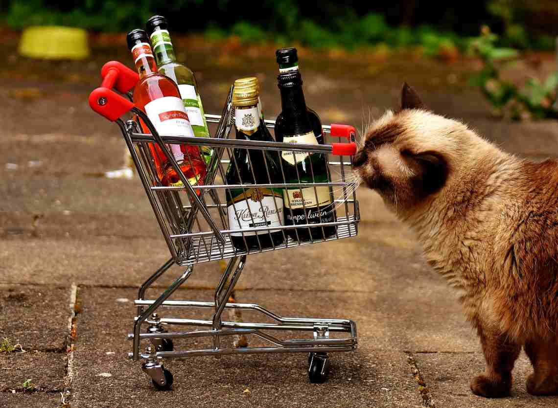 Тест от LifeGid: узнайте свой характер по алкоголю