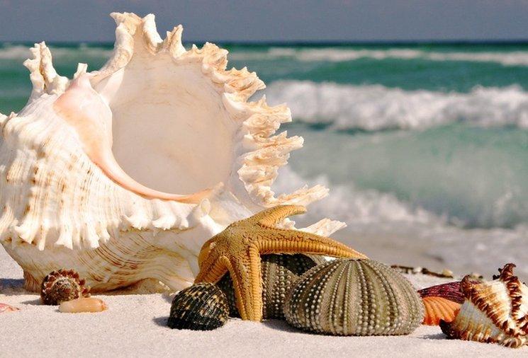 Фишки дня — 13 августа, море, отдых, ракушки, волны