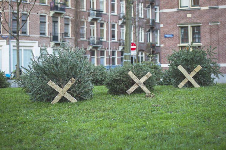 елки, выброшенные елки, улица, после Рождества
