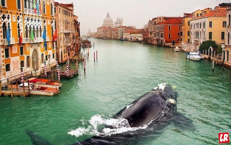 фишки дня - 19 февраля, Всемирный день кита