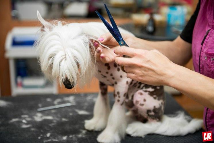открыть салон красоты для животных, стрижка собаки