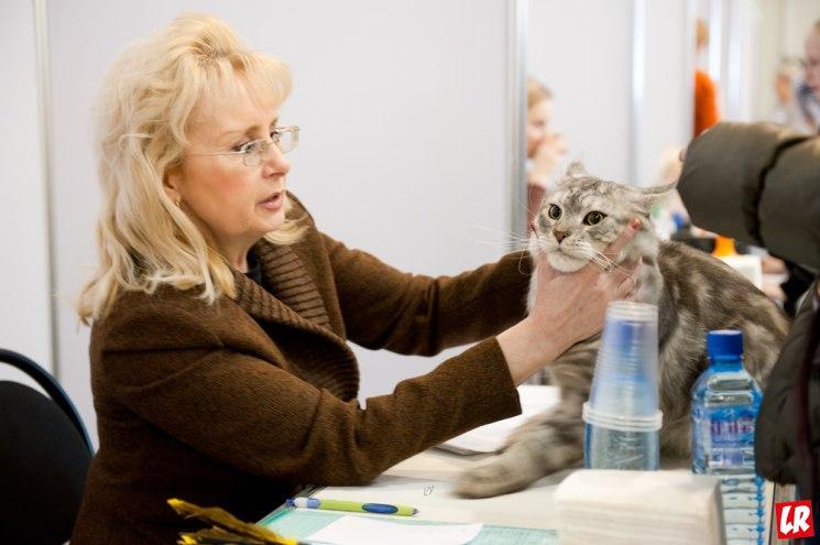 открыть салон красоты для животных