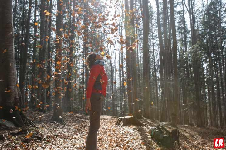 не спеша, лес, природа, научиться не спешить