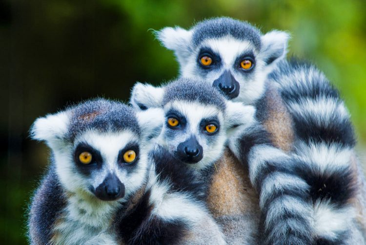 майские праздники, Мадагаскар