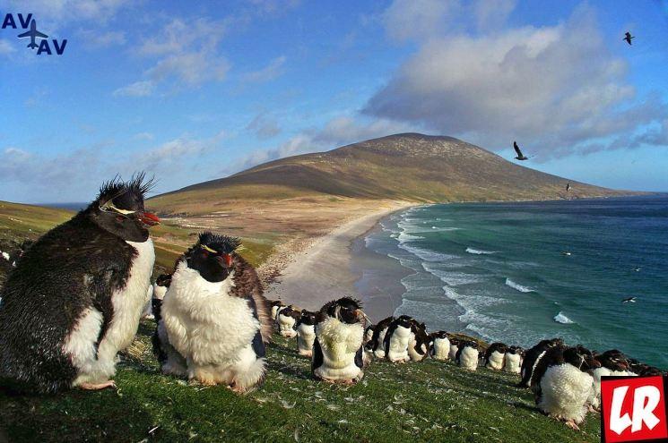 фишки дня - 2 апреля, День Мальвинских островов, праздники Аргентины