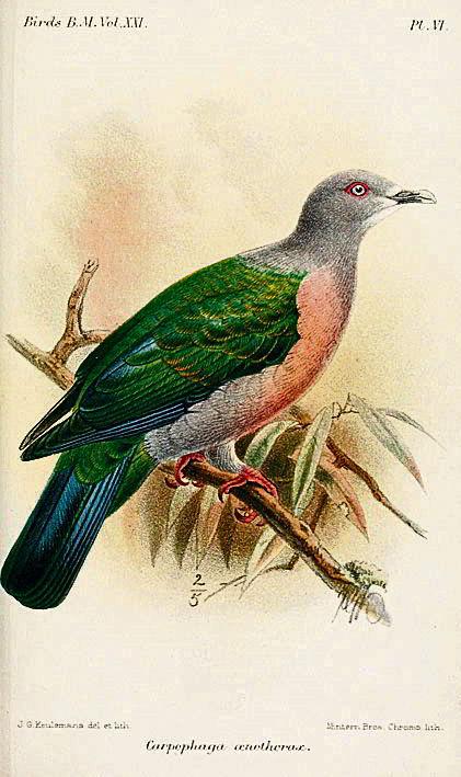 специи, зеленый голубь, контрабанда
