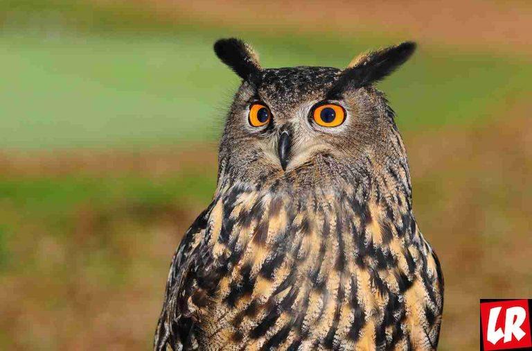 Тест отLifeGid— как узнать характер полюбимой птице