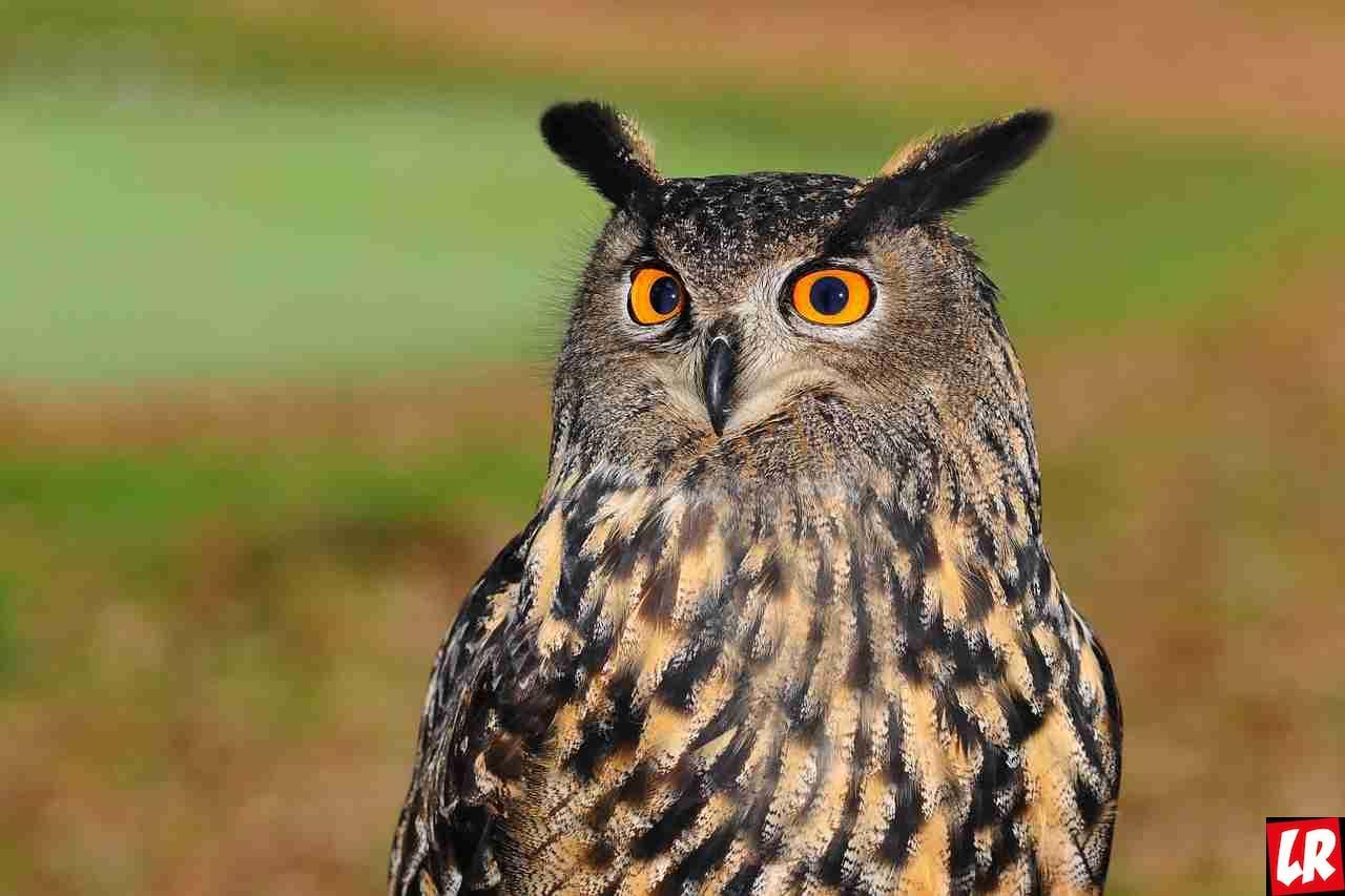 Тест от LifeGid – как узнать характер по любимой птице