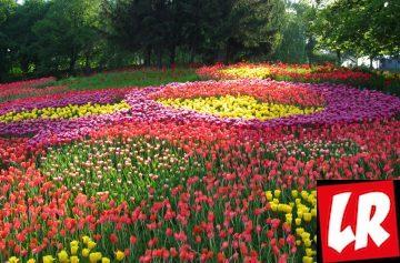 Певческое поле, выставка тюльпанов