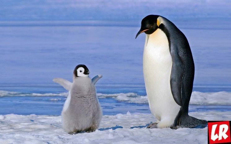 фишки дня - 25 апреля, День пингвина