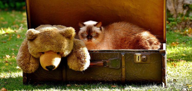 характер по чемодану, тест, чемодан, путешествие, кот, медведь, игрушка