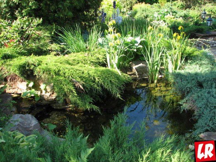 Сад в скандинавском стиле, пруд