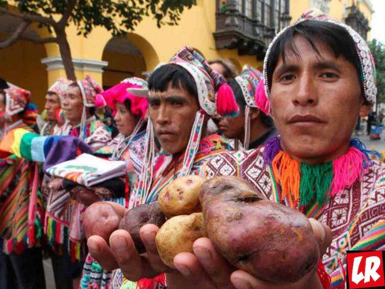 фишки дня - 30 мая, День картофеля Перу