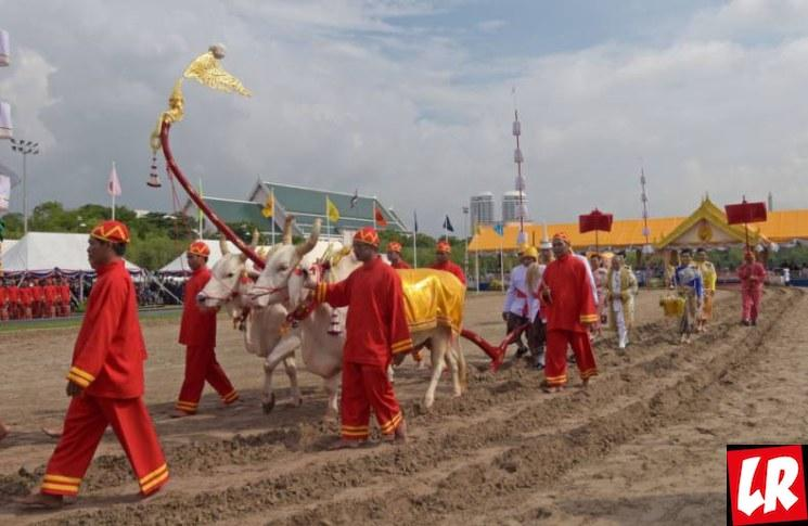 фишки дня - 14 мая, День первой Борозды Таиланд, праздники Таиланда