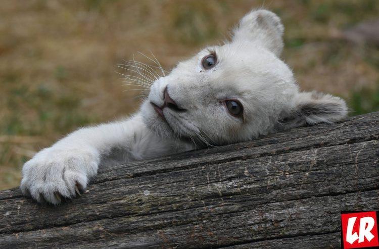 Отдых на выходные, Контактный зоопарк 12 месяцев