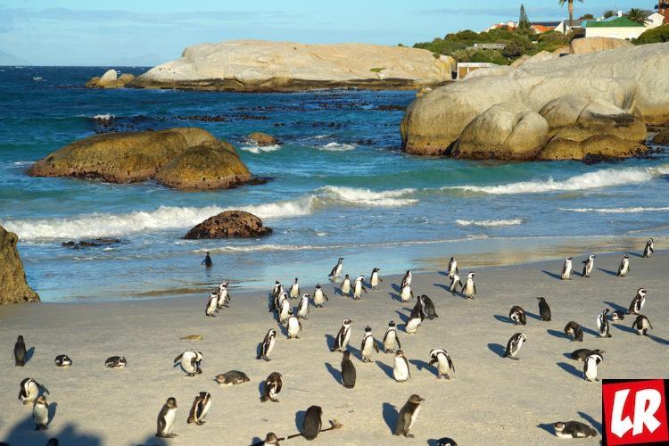куда поехать, пингвины, Куда поехать летом 2108