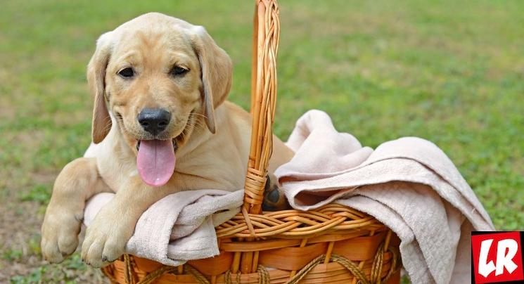фишки дня - 2 июля, всемирный день собак