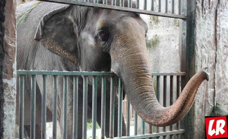 фишки дня - 20 июня, День защиты слонов