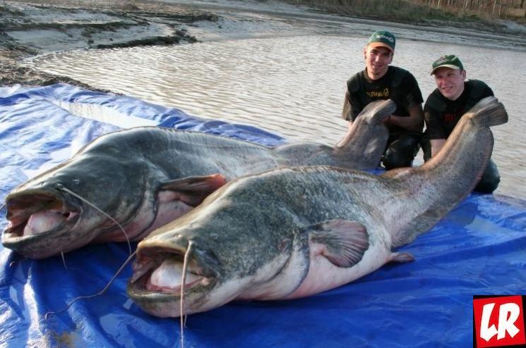 фишки дня - 8 июля, День рыбака