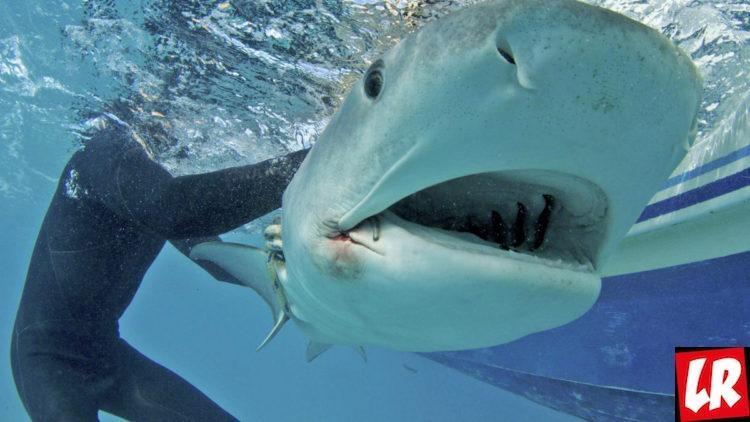 Беар Гриллс против акул
