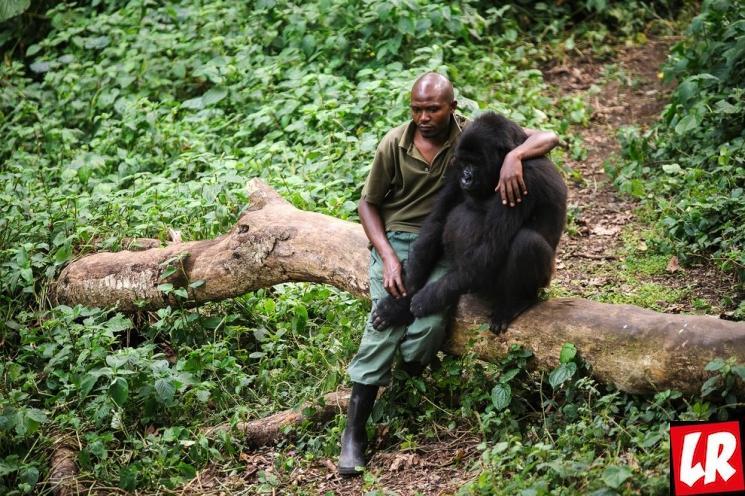 фишки дня - 31 июля, День рейнджеров, рейнджеры Африка