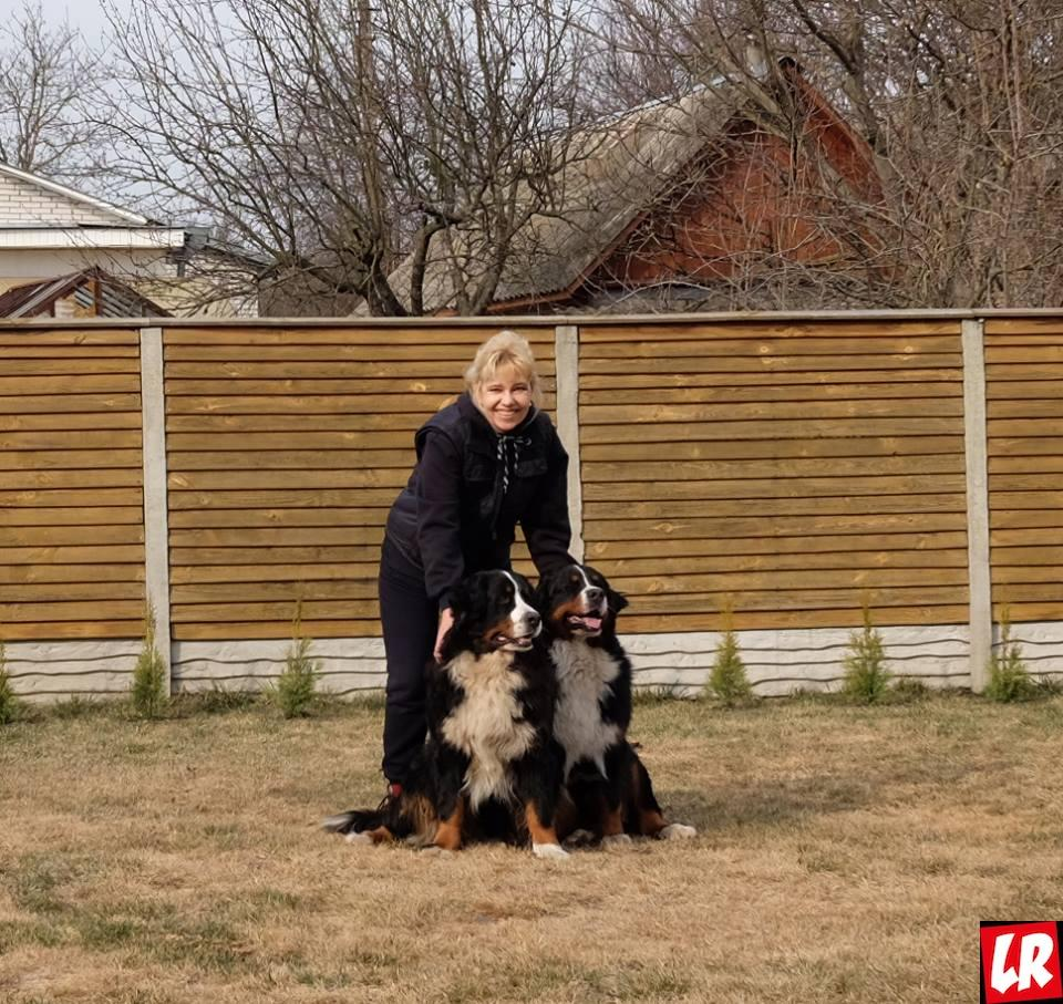 модные собаки, бернская овчарка
