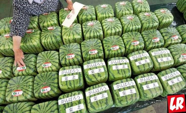 фишки дня - 3 августа, День арбуза, квадратный арбуз