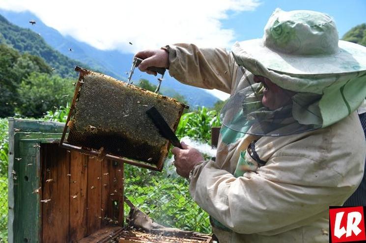 фишки дня - 18 августа, День пчел США, пчеловодство