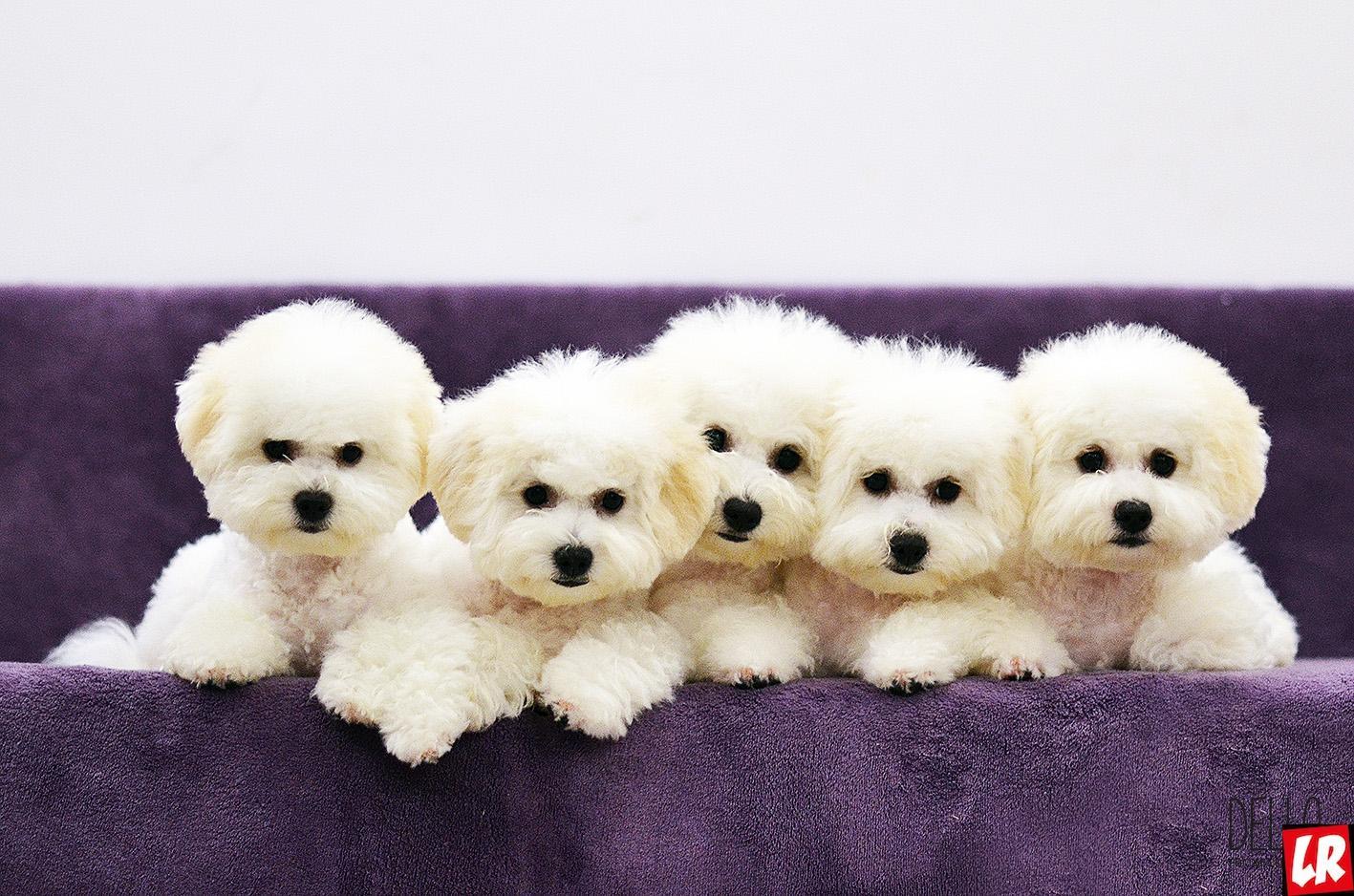Модные собаки. Гувернер за 800 грн в день и свадьба за 1500 грн