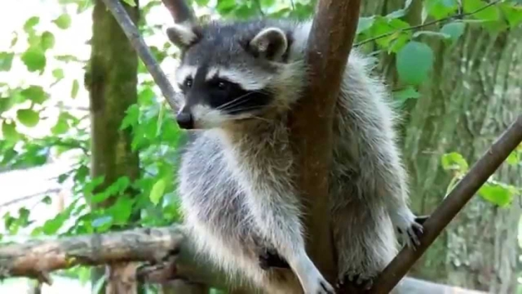 фишки дня - 26 августа, день Ровно, зоопарк Ровно